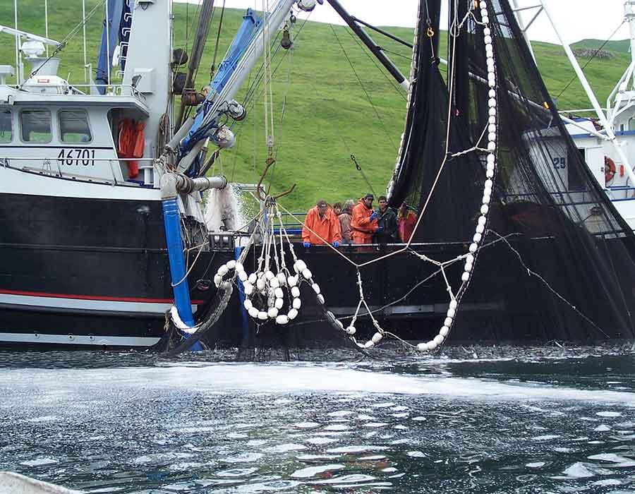 commercial-fishing-branding 1